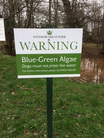 a sign warns of blue-green algae in water